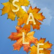 Autumn leaf for sale — Photo