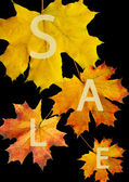 Autumn leaf for sale — Stock Photo