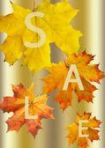 Autumn leaf for sale — Stock Photo