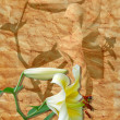 White lily on old paper — Stock Photo