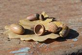 Oak acorn and leaf — Stock Photo