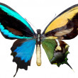 Stock Photo: Varicoloured butterfly