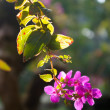 Stock Photo: Flower with morning light