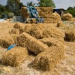 Foto Stock: Straw on ground