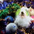 Christmas decorations — Stock Photo #3978029
