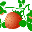 Strawberry — Image vectorielle