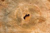 Tree Stump Background — Stock Photo