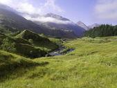 Green grass of a mountain — Stock Photo