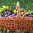 Basket of Plums — Stock Photo #4536179