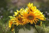 Sunflower Bouquet — Stock Photo