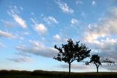 Árboles solitarios frente a cielo de la noche — Foto de Stock