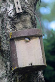 Birdhouse with young bird — Stock Photo