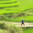 Labourer with tools in rice fields, Vietnam — Stock Photo #4925612