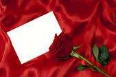 Card with a rose — Stock Photo