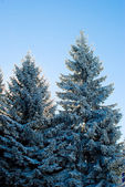 Winter detail — Stock Photo