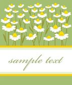 Postcard with chamomile — Stock Vector