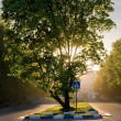Tree with sunset behind it — Stock Photo