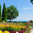 Stock Photo: Botanic garden with flowers and sea
