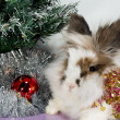 Rabbit under Christmas tree — Stock Photo #4300850
