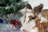 Rabbit under the Christmas tree — Stock Photo