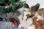 Rabbit under the Christmas tree — Stock Photo