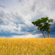 Stock Photo: Lonley tree