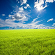 Summer green field - Stock Photo
