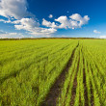 Green summer field — Stock Photo #4422298