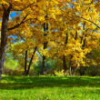Day autumn park — Stock Photo #4423717