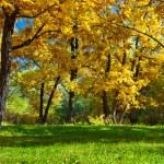 Day autumn park — Stock Photo