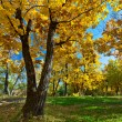 Autumn park scene — Stock Photo