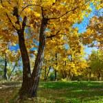Autumn park scene — Stock Photo