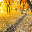Autumn morning park — Stock Photo #4423981