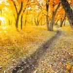 Autumn morning park — Stock Photo