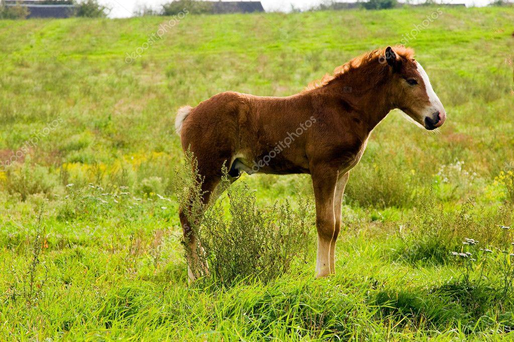 Newborn horse standing - photo#26