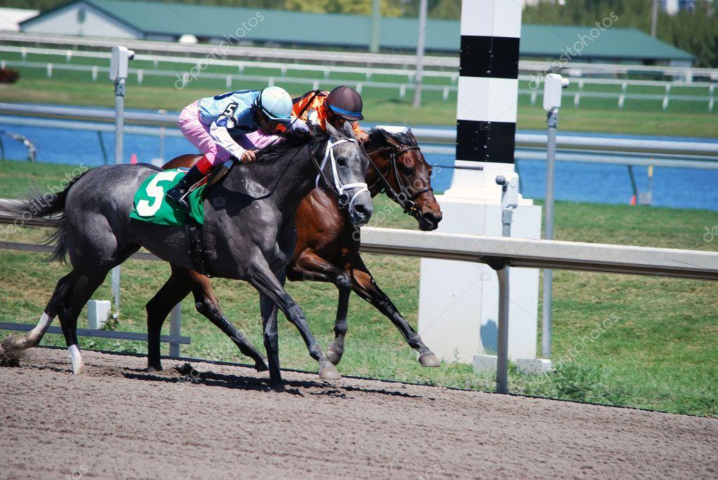 Racing horse head
