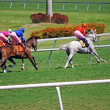 Stock Photo: Thoroughbreds Racing on Grass
