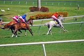 Thoroughbreds Racing on Grass — Stock Photo