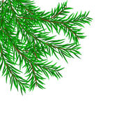 Firry branch — Stock Vector