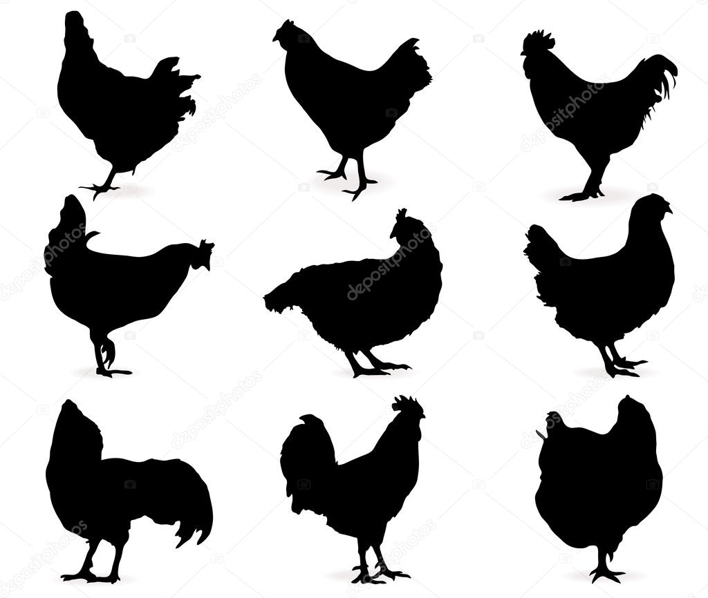 Silhouette of hens. Set — Stock Vector #4249493