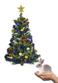 Rabbit and tree — Stock Photo