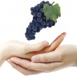 Grape and hands — Stock Photo