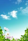 Spring — Fotografia Stock