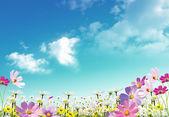 Primaveral — Foto de Stock
