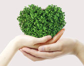 Hands and green heart — Stock Photo