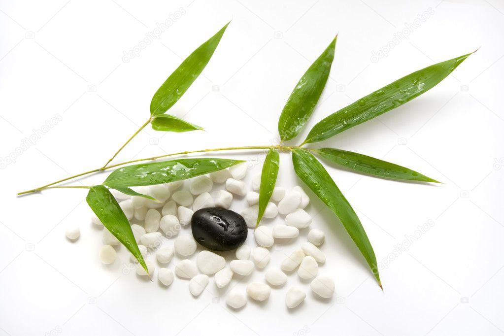 Fresh bamboo leaves with water drops and zen stones on white background — Stock Photo #4032879