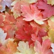 Autumn background — Stock Photo #4135025