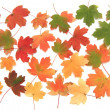 Autumn leaves background — Stock Photo #4135052