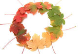 Multi-colored autumn leaves — Stock Photo