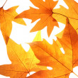 Autumn leaves background — Stock Photo #4688687